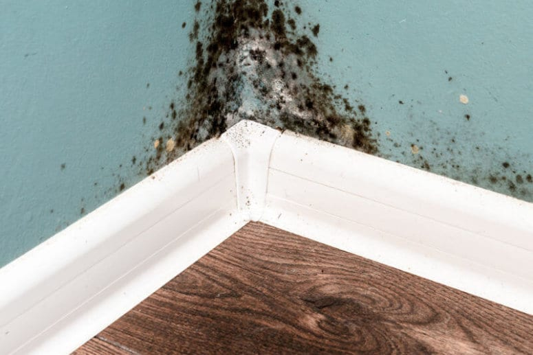 The truth about mould in your home